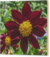 Deep Red And Yellow Flowers Wood Print