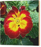 Deep Red Bright Yellow Wood Print