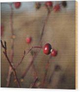 Deep Red Rose Hips On Brown And Blue Wood Print