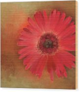 Deep Shaded Daisy Wood Print