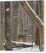 Deep Woods Deer Wood Print