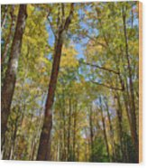 Deep Woods Wood Print