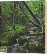 Deep Woods Stream 3 Wood Print