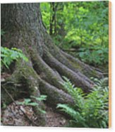Deeply Rooted Wood Print