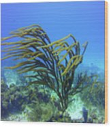Deepwater Gorgonia Just Flowing In The Wind Wood Print