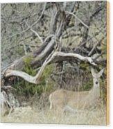 Deer 009 Wood Print