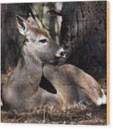 Deer 336 Wood Print