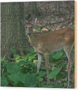 Deer 7414 Wood Print
