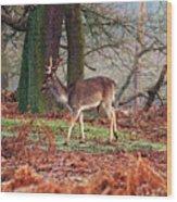 Deer Among The Ferns Wood Print
