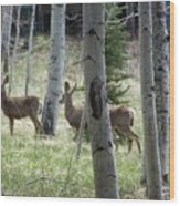 Deer And Aspen Wood Print