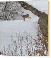 Deer At Castlewood Canyon Wood Print