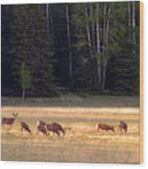 Deer At Kaibab Meadows Wood Print