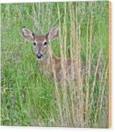 Deer Bedded Down In Grass Wood Print