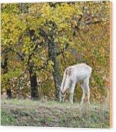 Deer Boy Wood Print