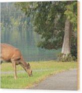 Deer By Crescent Lake Wood Print