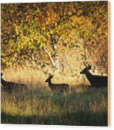 Deer Family In Sycamore Park Wood Print