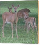 Deer Family Out For Evening Stroll Wood Print