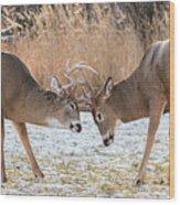 Deer Fight Wood Print
