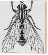 Deer Fly Wood Print