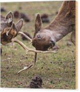 Deer Games Wood Print