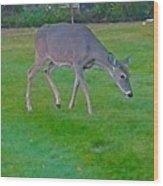 Deer Grazing In City Field Wood Print