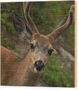 Deer IIi Wood Print