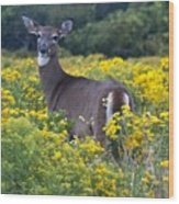 Deer In A Field Of Yellow Flowers Wood Print