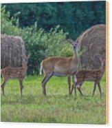 Deer In A Hay Field Wood Print