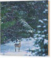 Deer In A Snowy Glade Wood Print