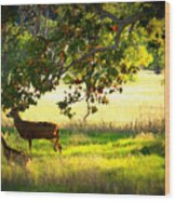 Deer In Autumn Meadow - Digital Painting Wood Print