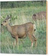 Deer In Boulder Colorado Wood Print