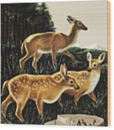 Deer In Forest Clearing Wood Print