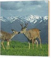 Ma-181-deer In Love  Wood Print