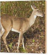 Deer In Morning Ligh Wood Print