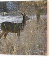 Deer in Morning light Wood Print