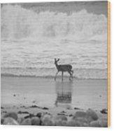 Deer In Ocean Black And White Wood Print