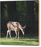 Deer In Shadows Wood Print