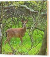 Deer In Shanendoah Mountains Wood Print