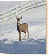 Deer In Snow Covered Road Wood Print