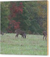Deer In The Fall Wood Print