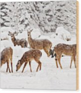 Deer In The Snow 2 Wood Print