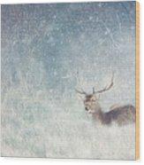 Deer In Winter Scene Wood Print