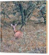 Deer In Woods Wood Print