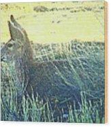 Deer Lying Down Wood Print