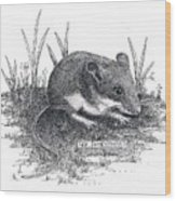 Deer Mouse Wood Print