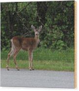 Deer On Road Wood Print
