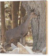 Deer On The Look Out Wood Print