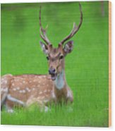 Deer Ruminating Wood Print