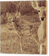 Deer Sepia V3 Wood Print