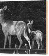 Deer Tracks Wood Print